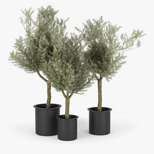 3D olive tree model