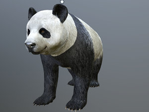 3D model panda bear animations