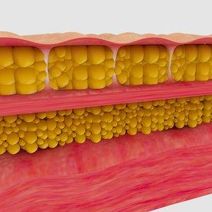cellulite 3D model