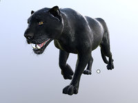 black panther animation model