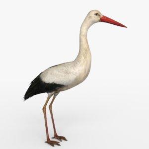 stork bird animal 3D model