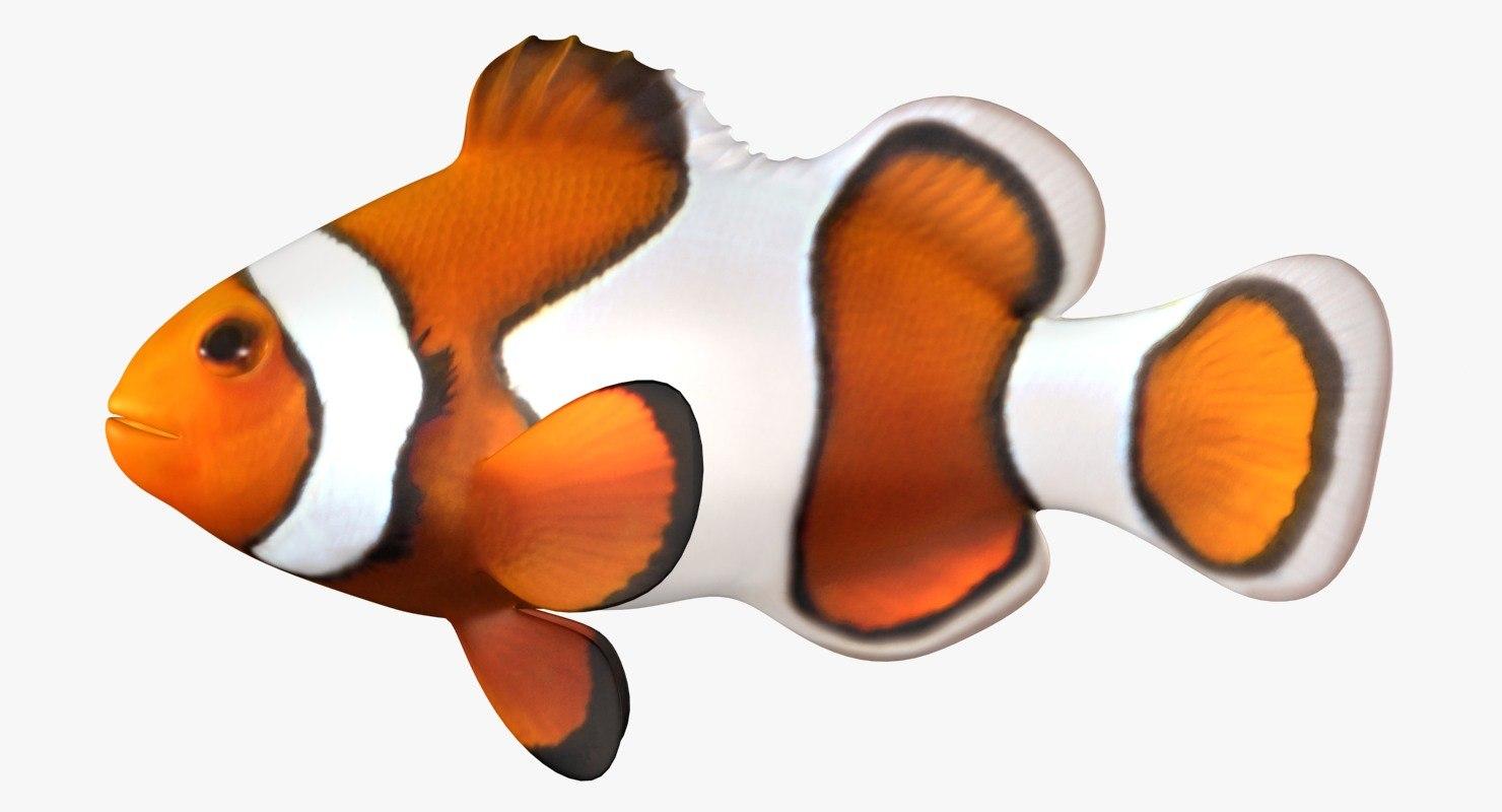clownfish scanline model