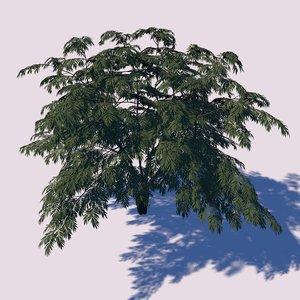 3D aralia tree model