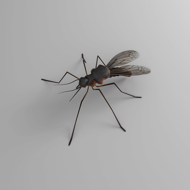 animals mosquito insect 3D model