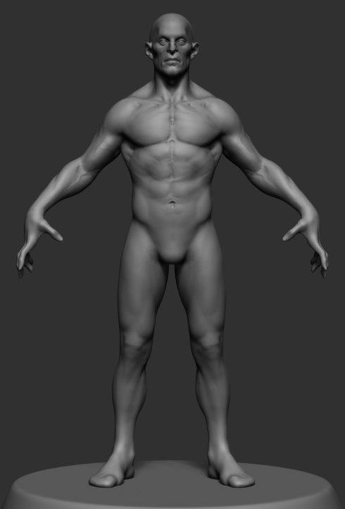 3D male anatomy model