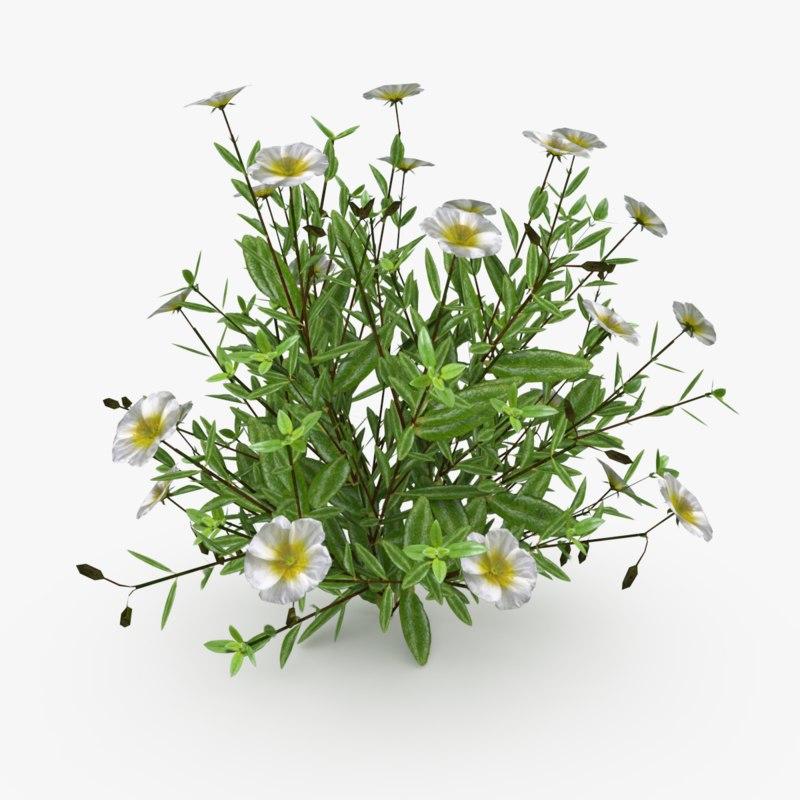 3D model helianthemum flowering plants