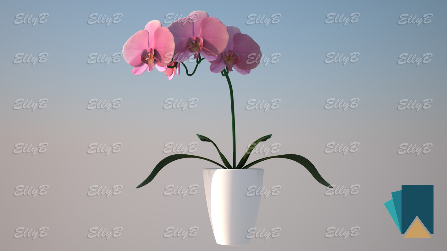 orchid modeled 3D model