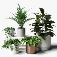 plants set 06