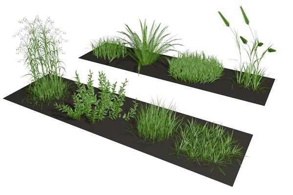 herb herbage 3D