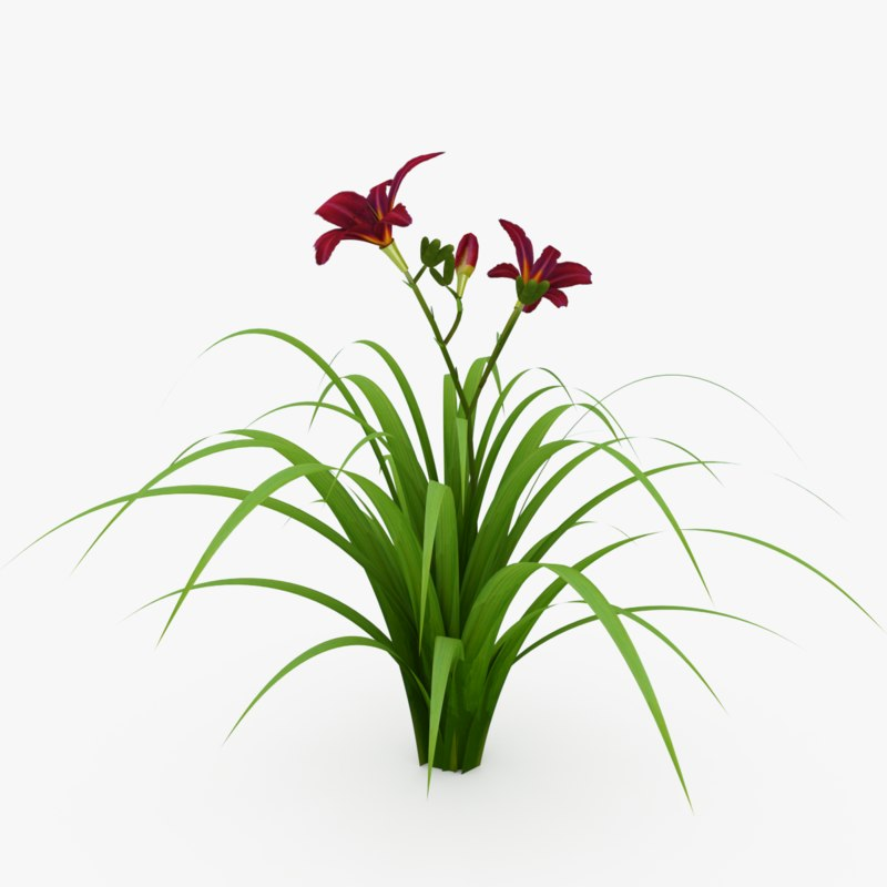 3D hemerocallis plants flowers
