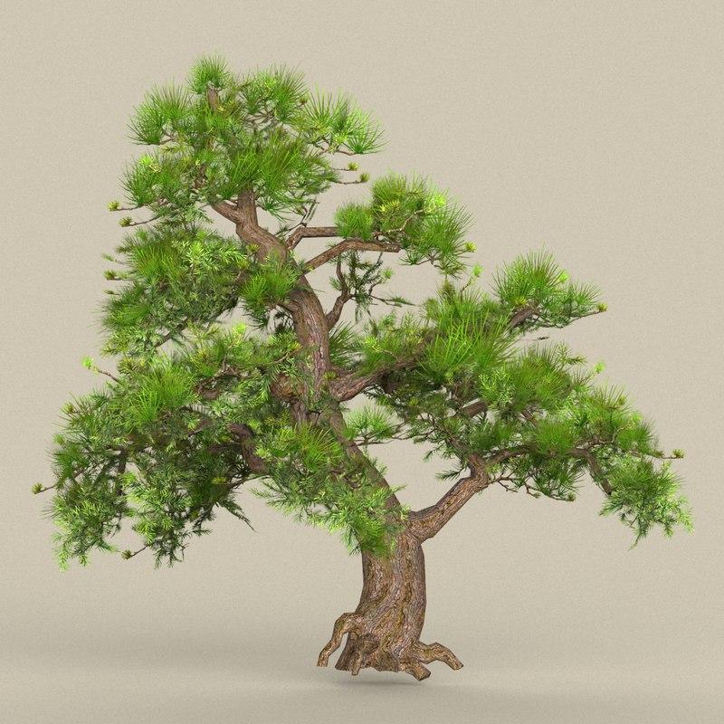 3D tree materials model