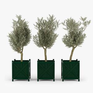 box olive tree 3D model