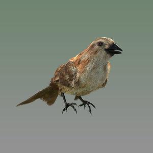 bird modeled model