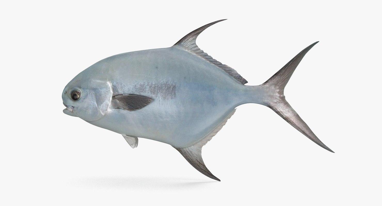 3D permit fish