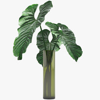 3D anthurium plant flower
