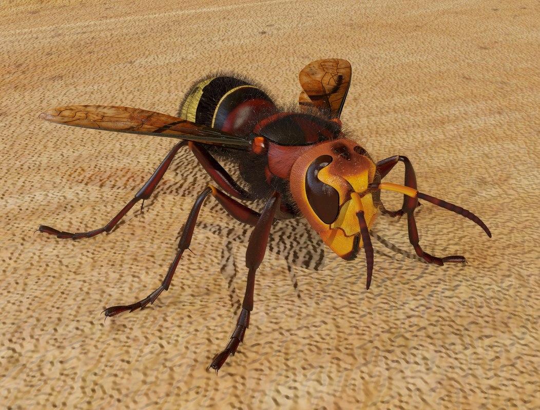 3D model realistic hornet animation