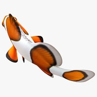 clownfish animation 3D model