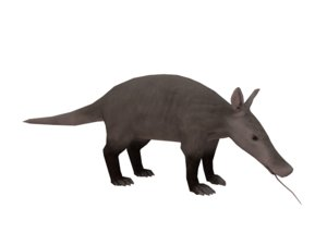 3D aardvark