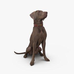 dog weimaraner 3D model