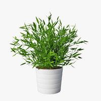 pot plant 01