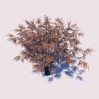 3D barberry tree