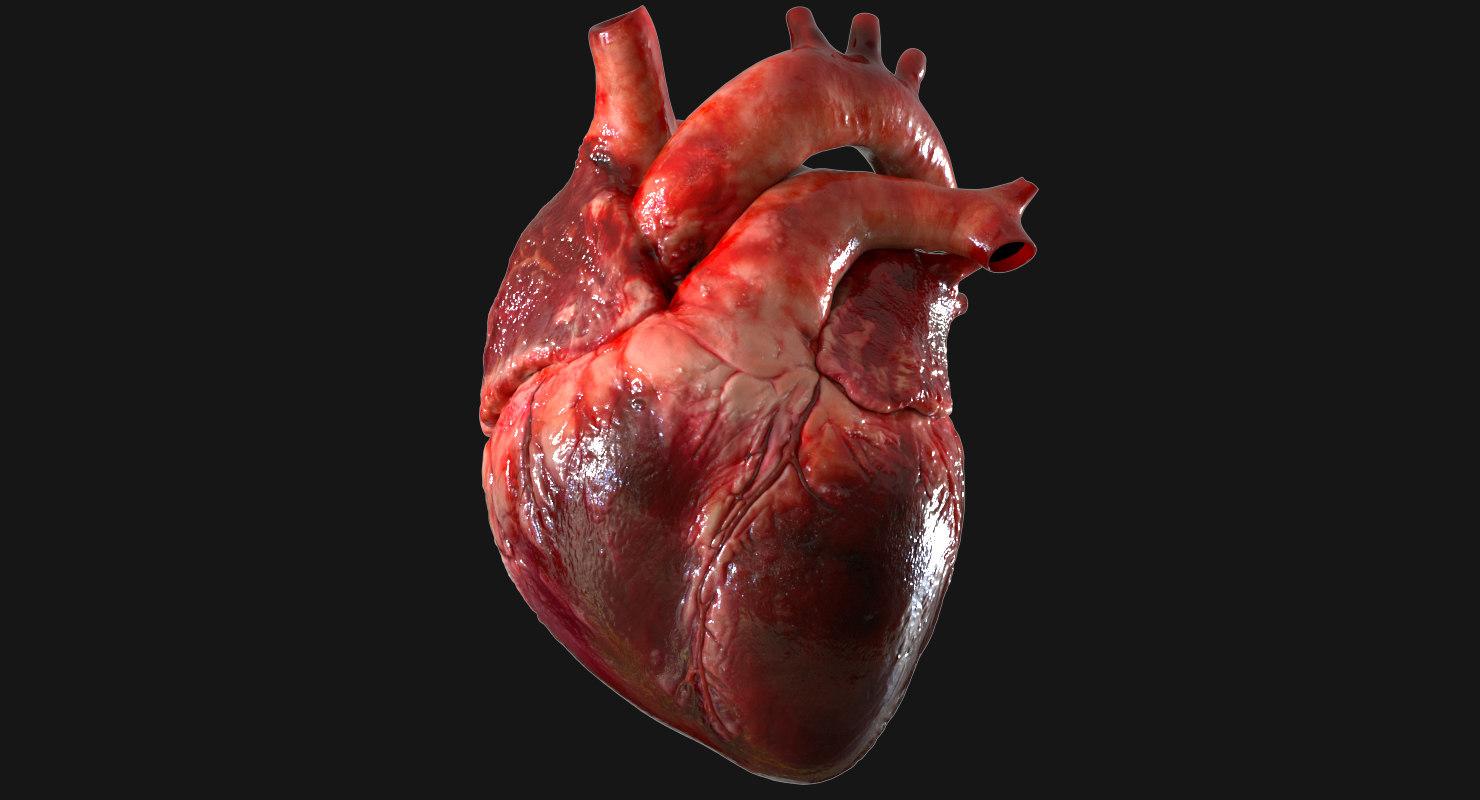 3d Human Heart Anatomy Model Turbosquid 1283134