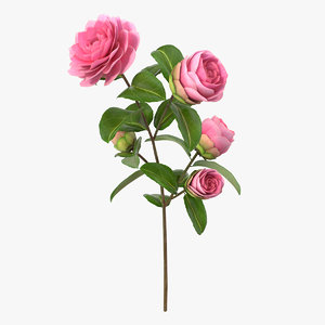 camellia pink 3D