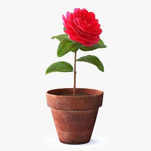 3D model flower camelia pot