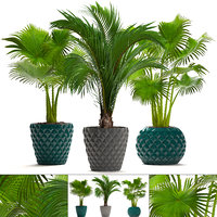 palms hedyscepe pots 3D model