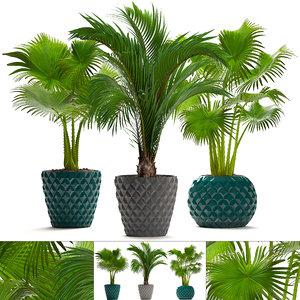 palms hedyscepe pots 3D model