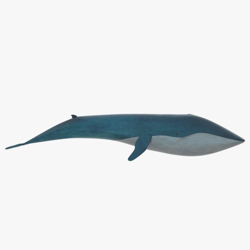 3D blue whale