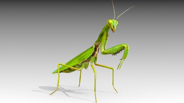 3D insect invertebrate model