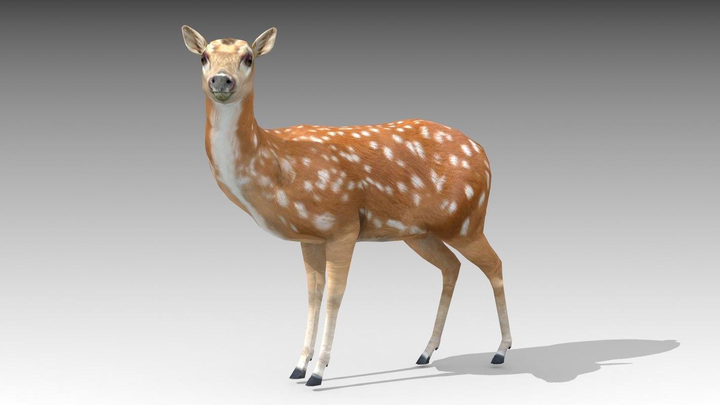 female deer 3D