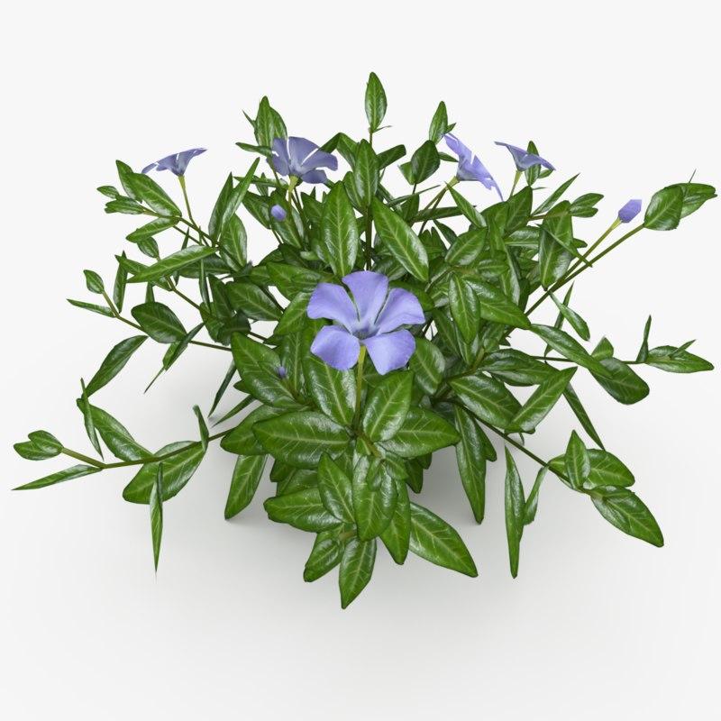 3D vinca minor flowers model
