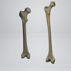 3D model tibia cannon bone