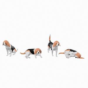 3D beagle 01