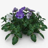 3D violas planting model