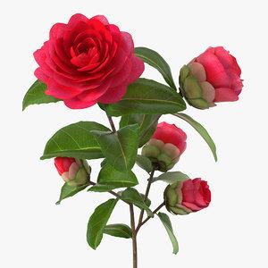 garden flower camellia red 3D model
