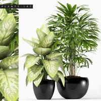 plants 162