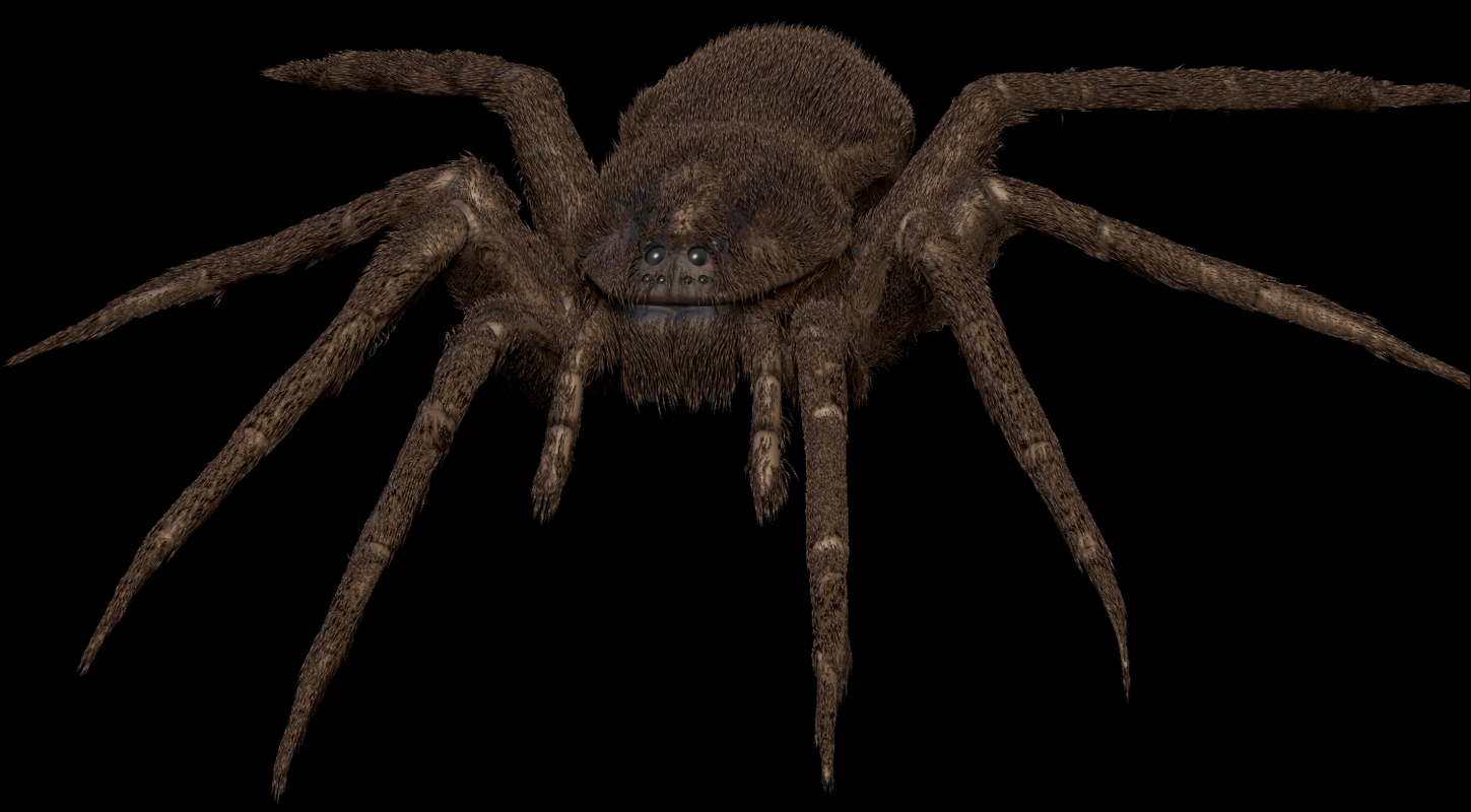 spider bug insect 3D model
