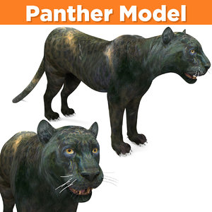 3D realistic panther ready model