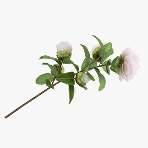 3D model white camellia flower