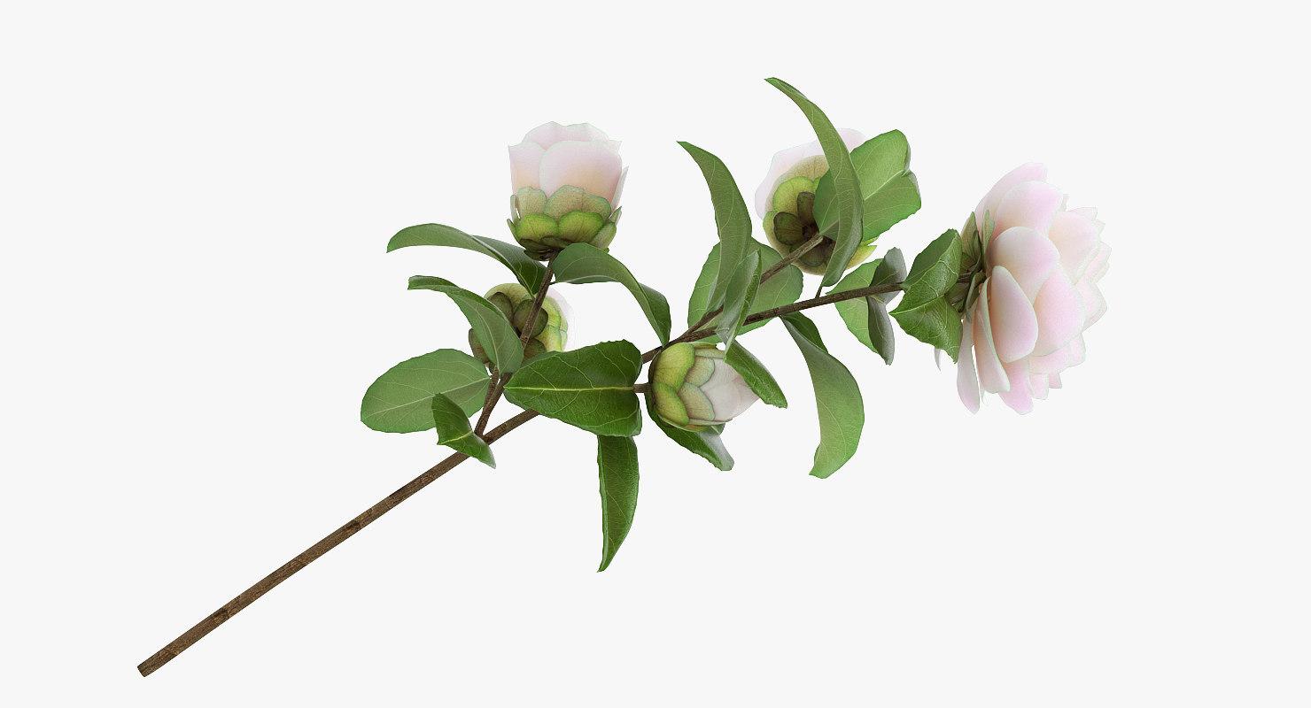 3D model white camellia flower
