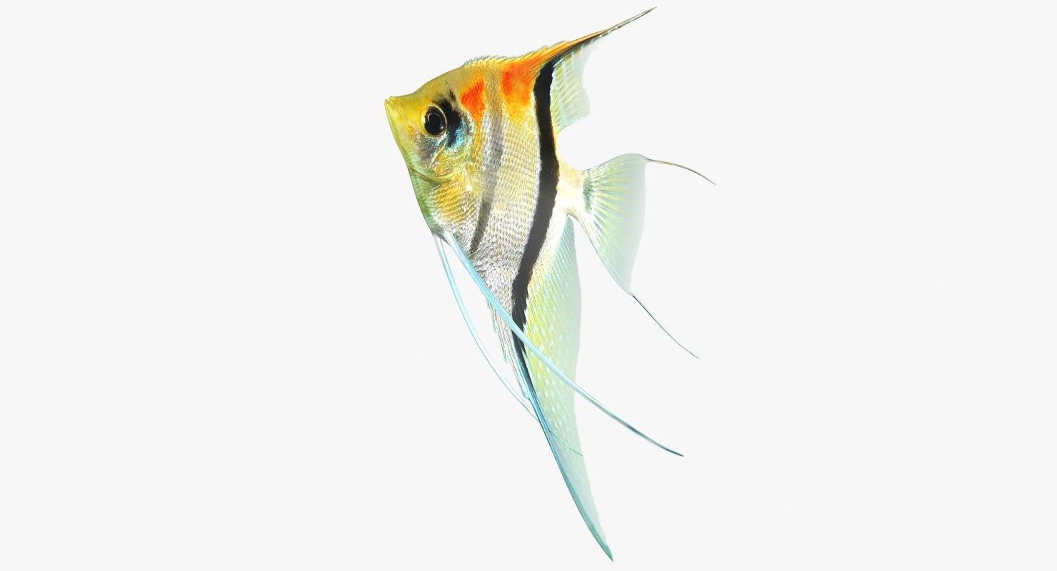 manacapuru angelfish rigged 3D model