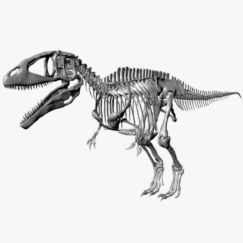 skeleton carcharodontosaurus 3D model