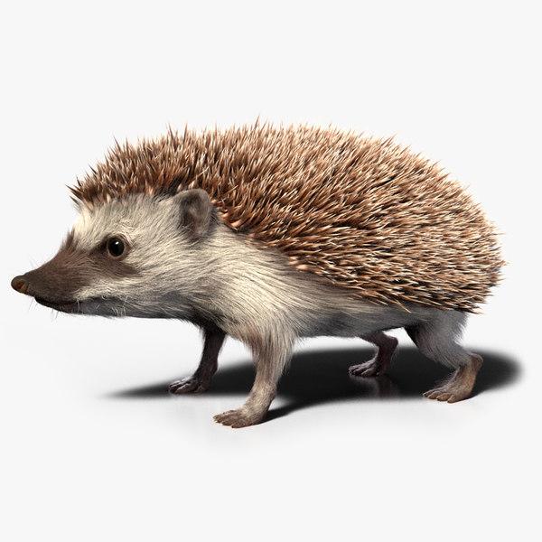 hedgehog zbrush sculpt 3D