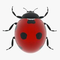 3D model ladybug