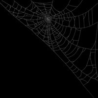 spider web 3D