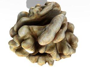 3D kernel walnut model