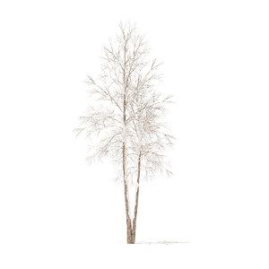 river birch snow 4 3D model